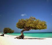 Karibikinsel Aruba: Strandimpressionen, © Aruba Tourism Authority