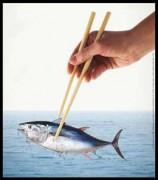 Thunfisch: Finger weg! © WWF