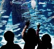 Das Aquarium des IFM-GEOMAR, Foto: Gulyas/Paasch, IFM-Geomar