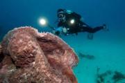 Die größte Hirnkoralle der Welt vor Tabago, Foto: www.visittnt.de