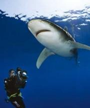 Das Plakat der Sharkprojekt-Herbsttour