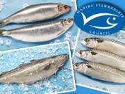 Beim Fischkauf sollte man auf das blaue MSC-Siegel achten