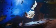 Heiraten mit Tauchschein im tiefsten Haibecken Europas im Palma Aquarium, Foto: Danyel André
