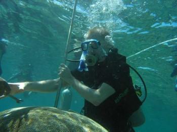 Korallenstock