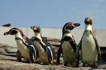 Pinguine im Ozeaneum