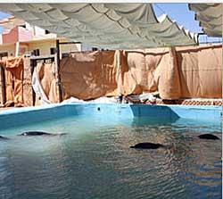 Hurghada Delphine im Pool