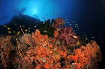 Tauchgang vor Papua Neuguinea