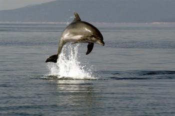 Adria-Delphin
