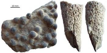 Fossile Schwämme