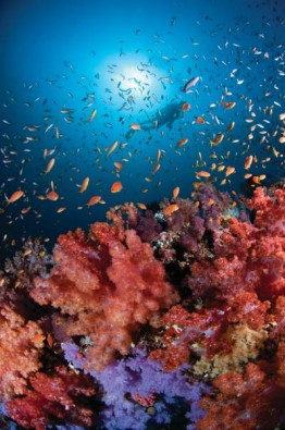 Farbenpracht unter Wasser, Foto: @ Four Seasons