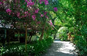 Grüne Insel, Foto: © Eriyadu Island Resort