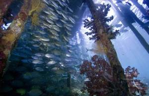 Artenreiche Unterwasserwelt , Foto: © Papua Diving