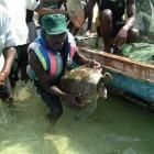 Ranger mit Schildkröte