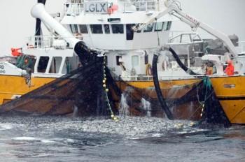 Heringsfischerei in Norwegen