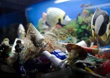 Ausstellung Aquarium-GEOMAR