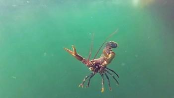 Hummer unter Wasser