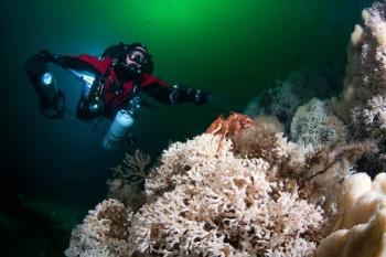 Kaltwasserkorallen