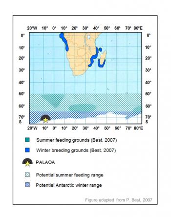 Karte der Buckelwale