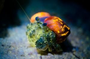 Angebot im Magic Island Dive Resort: Fluor Tauchen, Foto: © Rob De Vries