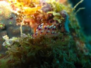 Natürlich gibt es auch viel Makro zu entdecken, Foto: © Submariner Diving Center