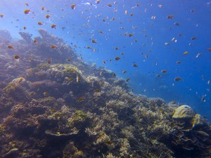 Hausriff, Foto: © Euro-Divers