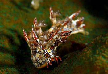 Nacktschnecke, Foto: © Sea Explorers