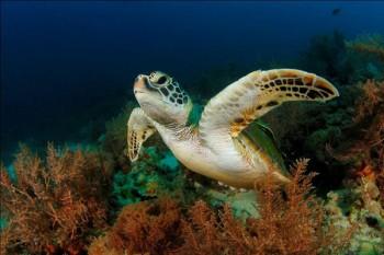 Schildkröte, Foto: © Sea Explorers