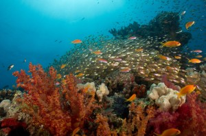 Riff, Foto: © Euro-Divers