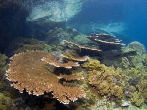 Intakte Hartkorallen, Foto: © Euro-Divers