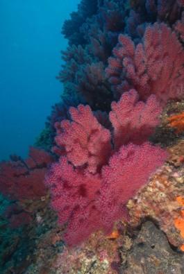 Farbenprächtiger Bewuchs, Foto: © Euro-Divers