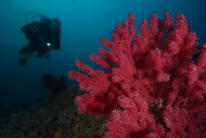 Naturschutzgebiet Cap de Creus, Foto: © Euro-Divers