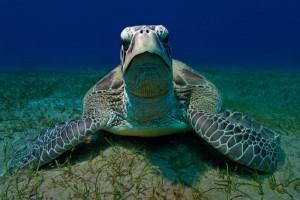 Schildkröte, Foto: © www.wernerlau.com