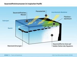 Sauerstoffminimumzonen