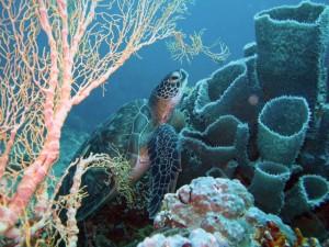 Unterwasserimpressionen, Foto: © Artistic Diving
