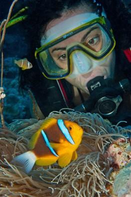 Anemonenfisch, Foto: © Frank Schneider