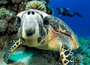 Schildkröte, Foto: © Paul Munzinger