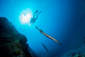 Abtauchen auf Fuerteventura, Foto: © Ocean World