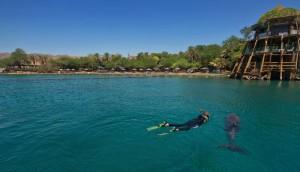 Dolphin-Reef-Eilat-2