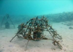 Coral Frames