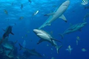 Haie vor Yap