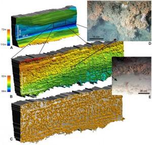 Morphologie und Fotos der Kaltwasserkorallen