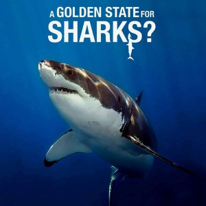 A Golden State for Sharks?