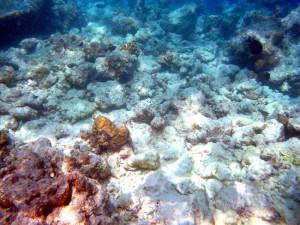 Abgestorbene Korallen