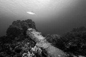 Moai-Statue im Meer