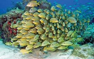 Fischreichtum im National Marine Sanctuary