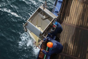 Polarstern-Besatzungsmitglieder ziehen ein Multinetz an Bord