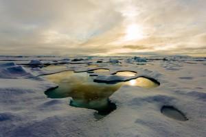 Melosira arctica vermehrt sich auch in den Schmelztümpeln