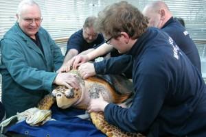 Dr. Dieter Göbel beim Schildkröten-Check