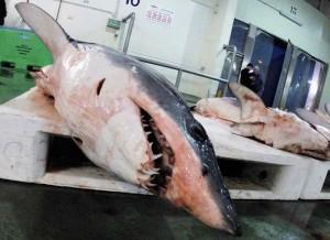 Größter Haiumschlagplatz Europas in Vigo