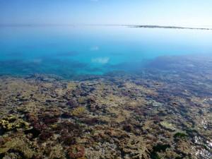 Das Riffdach am One Tree Reef